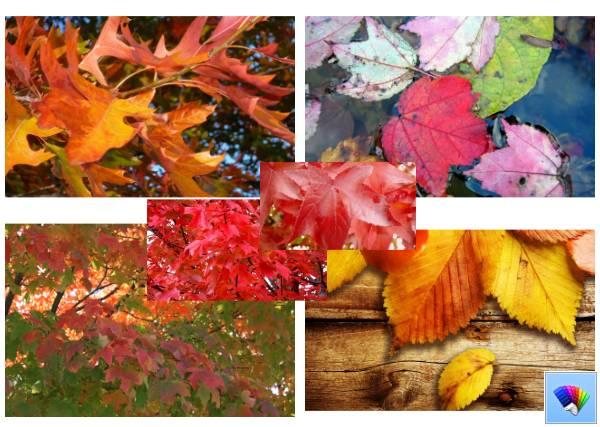 Autumn Leaves theme for Windows 8