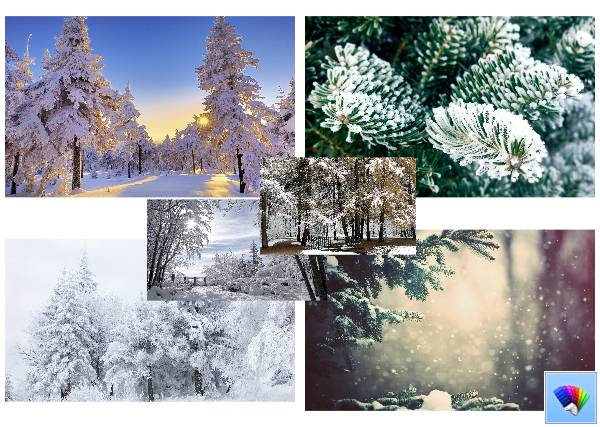 Winter Trees theme for Windows 8