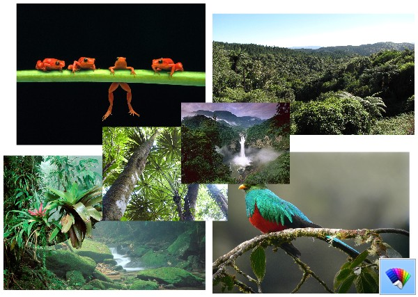 Tropical Forest theme for Windows 8