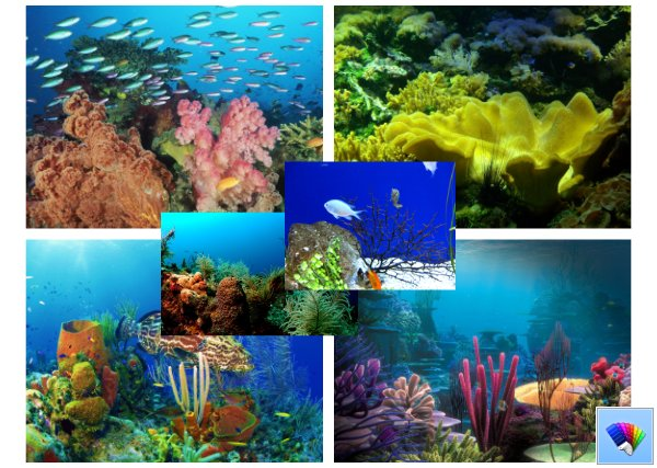 Life at the Reef theme for Windows 8