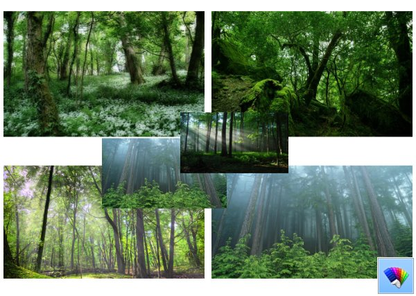 Summer Forest theme for Windows 8
