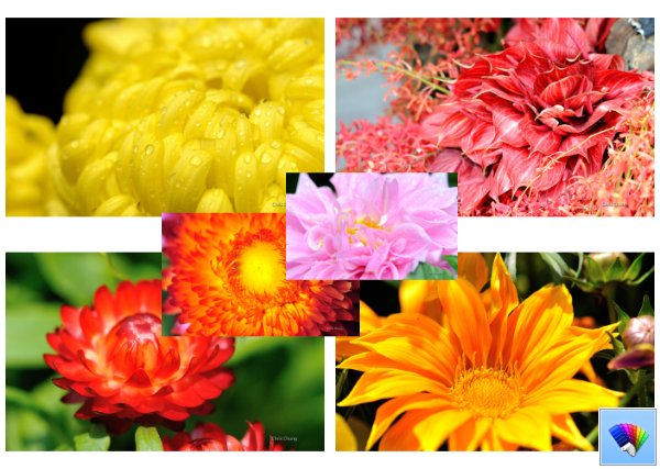 Close to the flower theme for Windows 8