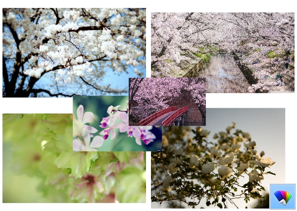Spring Blossoms theme for Windows 8