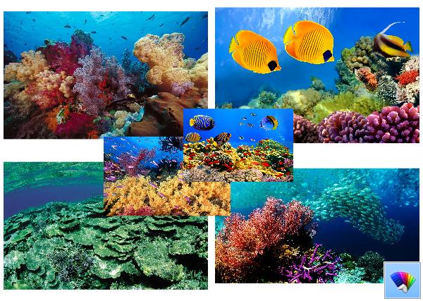 Corals theme for Windows 8
