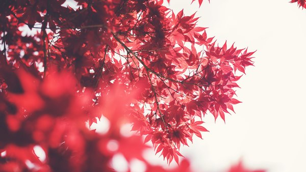 Gmccurdy Nature In Red