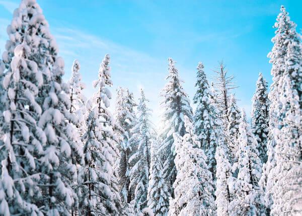 Sdai Snow