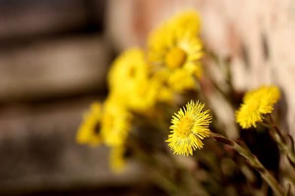 Sezgin Yellow