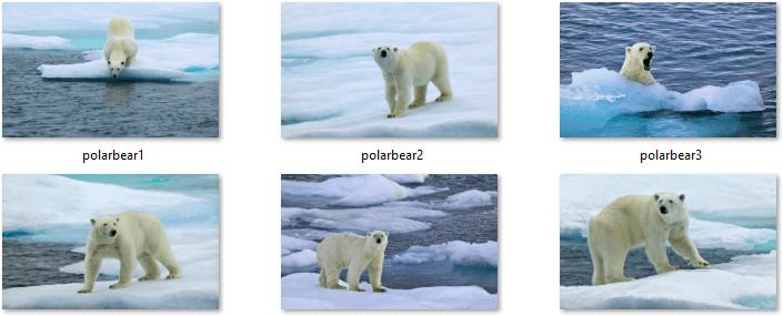 Polar Bears Themepack Images