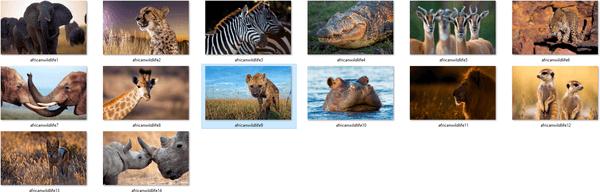 African Wildlife Wallpapers 1