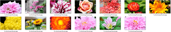 Fantastic Flowers Themepack Images