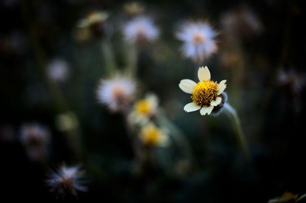 Bfantinatti Flower