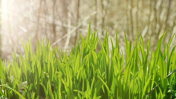 Monika Pure Green Grass