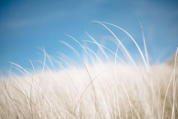 Rsmith Single Blade Of Grass