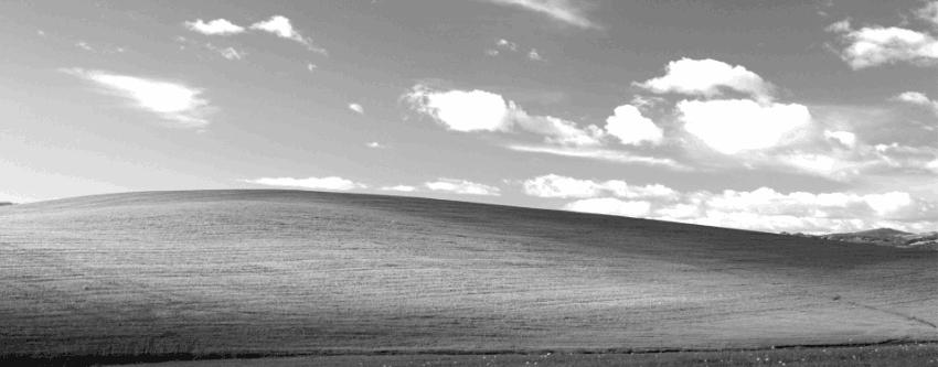 RONDA 4.46 DEL FOTOGRÁFICO CONCURSO DE MICRORRELATOS (GALA A LAS 22:30 H, HORA PENINSULAR) Windows-XP-Bliss-Grayscale-_