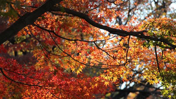 Dking Autumn In Japan