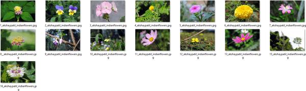 Windows 10 Indian Garden Themepack Wallp