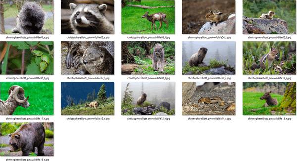 Pacific Northwest Wildlife Themepack 1