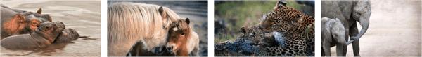 Animal Mothers 2 Premium Stripe