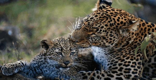 Animal Mothers 2 Premium
