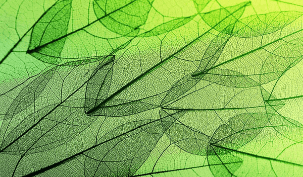 Leafy Structures