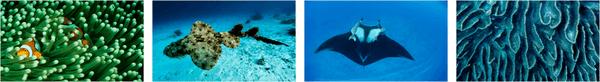 National Geographic Underwater PREMIUM Stripe