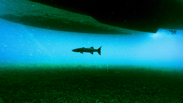 National Geographic Underwater PREMIUM