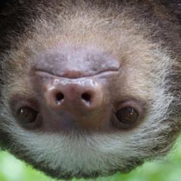 Sloths PREMIUM 4K Theme for Windows 10