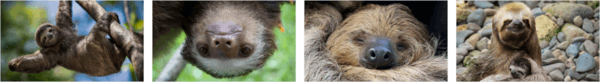 Sloths PREMIUM Stripe