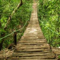 Download Wooden Walkways PREMIUM 4K Theme from Microsoft Store