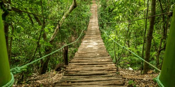 Wooden Walkways PREMIUM