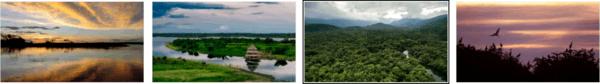Amazon Landscapes Stipe