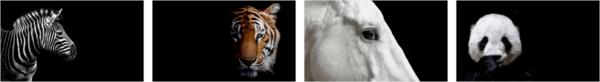 Animal Portraits PREMIUM Stripe